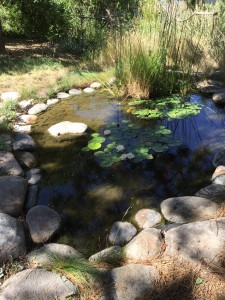 pond at Sowada's house